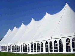 Rental store for 60 X210  WHITE GENESIS POLE TENT in Mishawaka IN